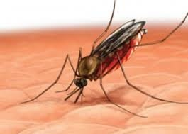 बनारस में  हर तरफ है डेंगू की दहशत