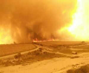 प्रदेश भर में आग की घटनाओं से सैकडो़ं बीघा फसल खाक