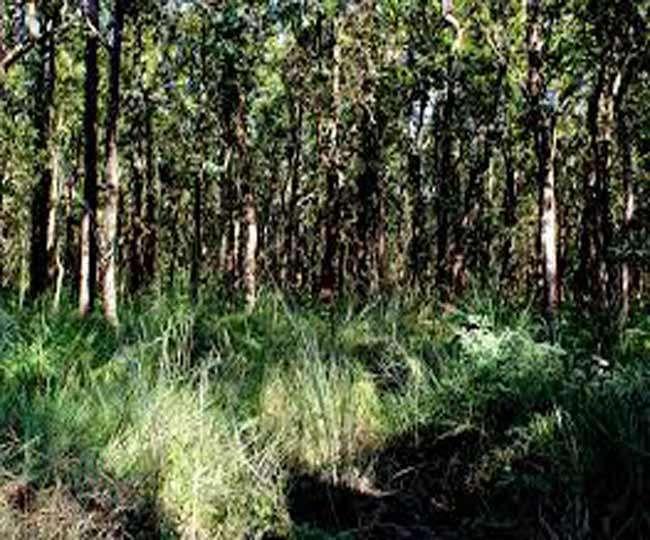 पीलीभीत की आबादी में घूमते दो तेंदुओं के आतंक से परेशान किसान