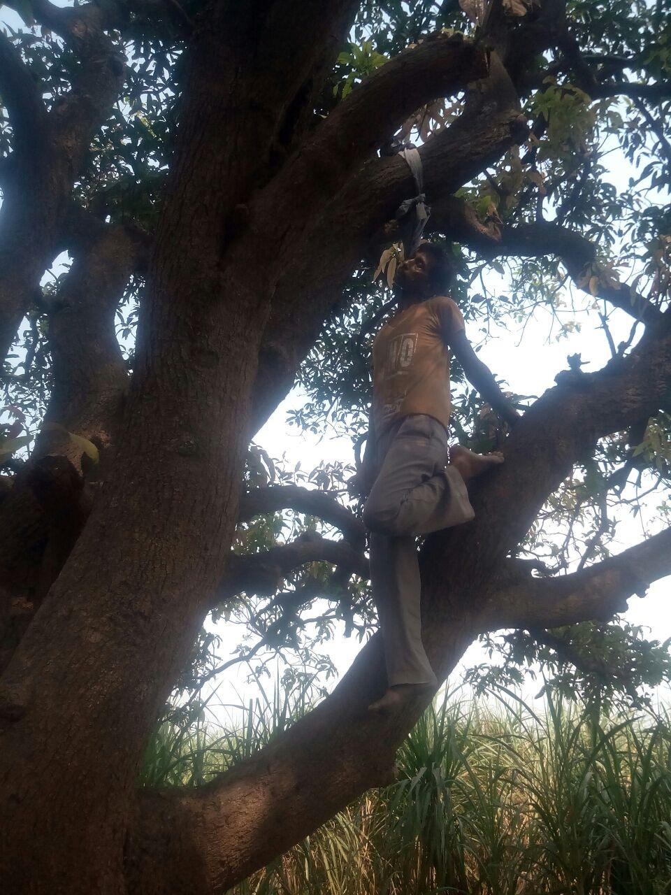 गोला कोतवाली क्षेत्र में पेड़ से लटकता मिला शव पुलिस मौके पर मौजूद