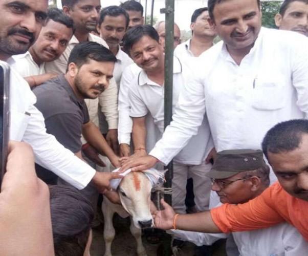 जिला मुजफ्फरनगर में सांड़ की तेरहवीं में हुआ ब्रह्मभोज, पहुंचे विधायक