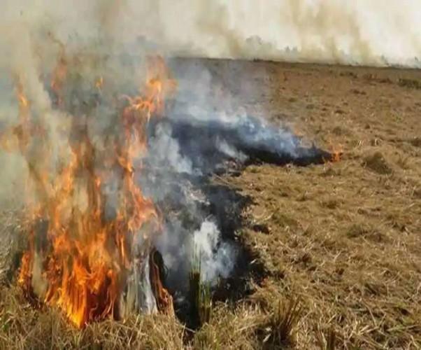 शाहजहांपुर में पराली जलाते 74 किसानों को पकड़ा, साढ़े छह लाख का जुर्माना
