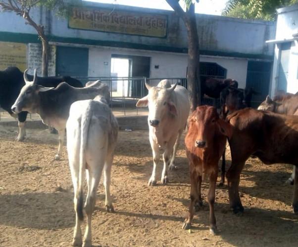 जिला हाथरस-अलीगढ़ के दो दर्जन से अधिक स्कूलों की छुट्टी कर बंद किए जानवर, पथराव