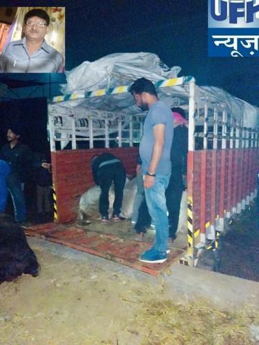 मथुरा में पुलिस और गौ रक्षकों की कर्त्तव्यनिष्ठा के चलते बीती रात एक बड़ी सफलता लगी हाथ