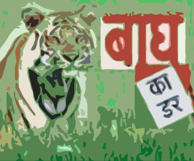 पीलीभीत में वर्षों से जंगल के बाहर असुरक्षित घूम रहा बाघ का पूरा कुनबा, ग्रासलैंड मैनेजमेंट जरूरी