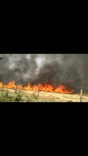 मोहनलालगंज के अंतर्गत  बिजली के तारों में शार्ट सर्किट से लगी आग लगभग 15बीघे गेहूं की फसल जलकर हुईं राख