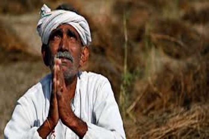 हमीरपुर-अन्ना जानवरों के कहर से किसान परेशान