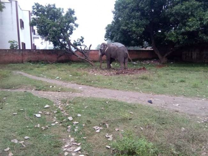 चंदोली मे सनकी हाथी ने पैरों से कुचलकर व्यवसायी को रौंद कर मार डाला