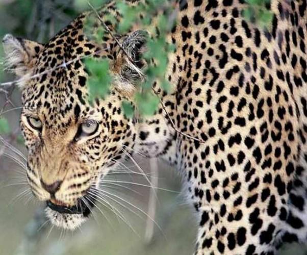 लखनऊ और बाराबंकी सीमा पर गोमती के किनारे जंगली जानवर की दहशत जंगल में पकड़ने के लिए लगाया गया पिंजड़ा