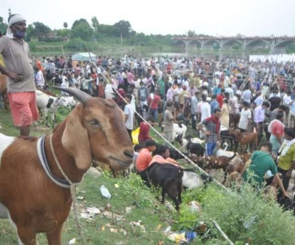 सजा बाजार नियम हुए तार-तार, कैंपवेल रोड व पक्का के पास लगी बकरा मंडी, अमीनाबाद व चौक क्षेत्र में उमड़ी खरीदारों की भीड़