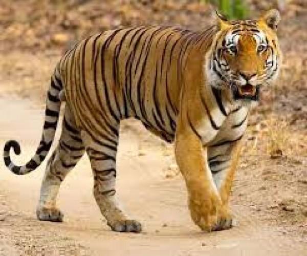 सीतापुर में तेंदुए ने युवक को बनाया निवाला, इलाके में फैली दहशत