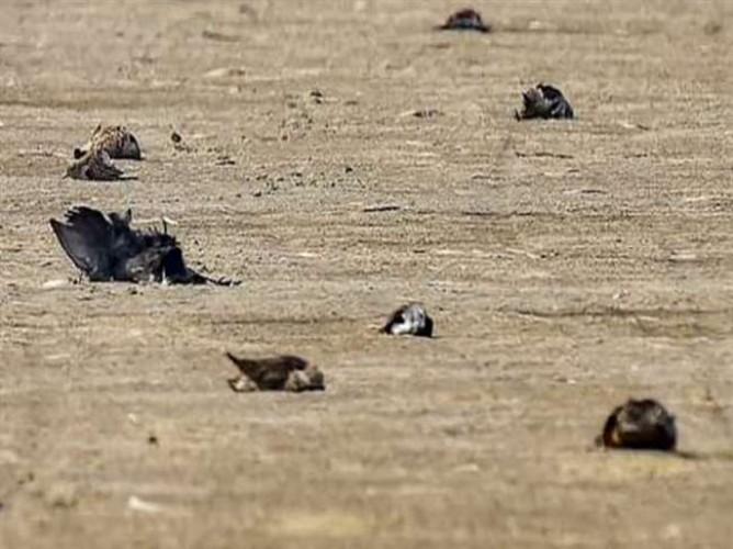 वाराणसी में आसमान से मर कर गिरने लगे कौवे