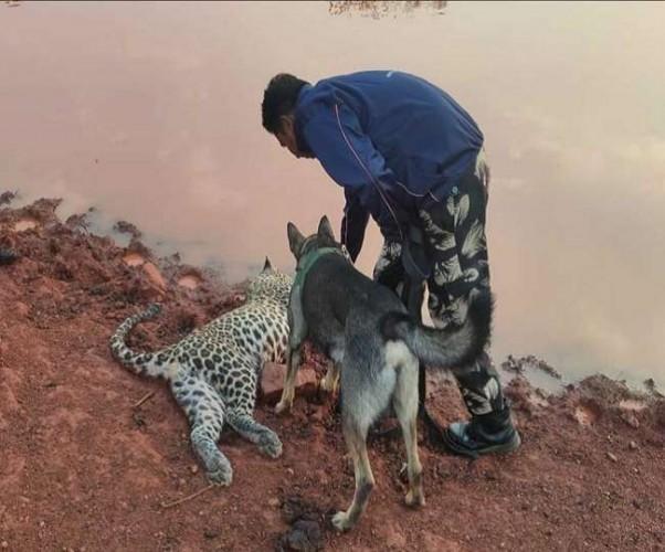 चित्रकूट में पानी पीने गए तेंदुए समेत तीन जानवरों की करंट से मौत