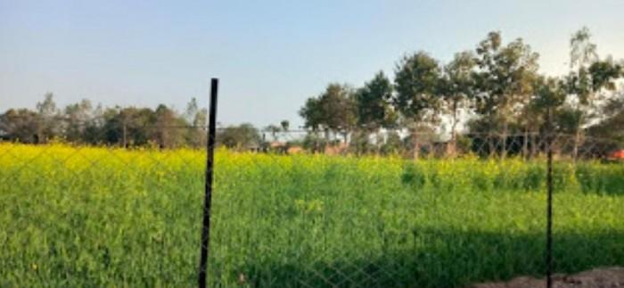 रायबरेली चारागाह की दो बीघा जमीन पर किया कब्ज़ा
