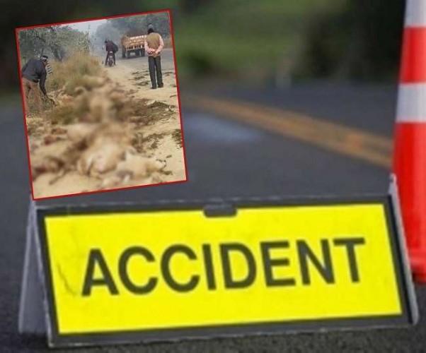 बलरामपुर में तेज रफ्तार DCM का कहर, भेड़ों के झुंड को रौंदा, 82 की मौत