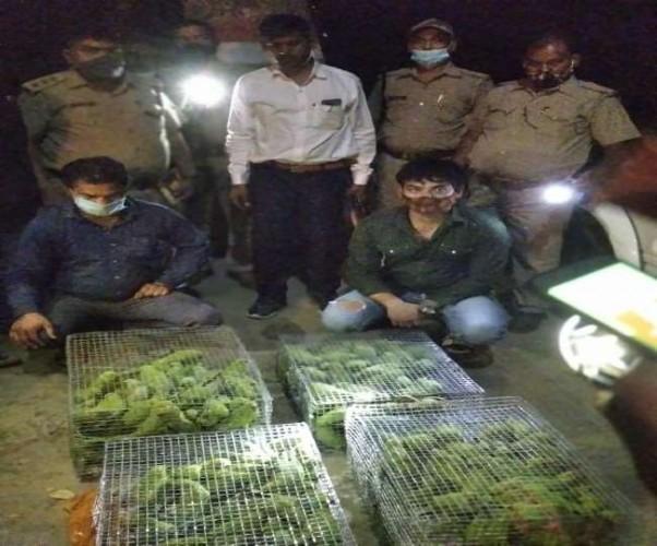 लखनऊ में प्रतिबंधित पक्षियों के दो तस्कर गिरफ्तार, STF और वन विभाग की टीम ने जब्त किए 250 तोते