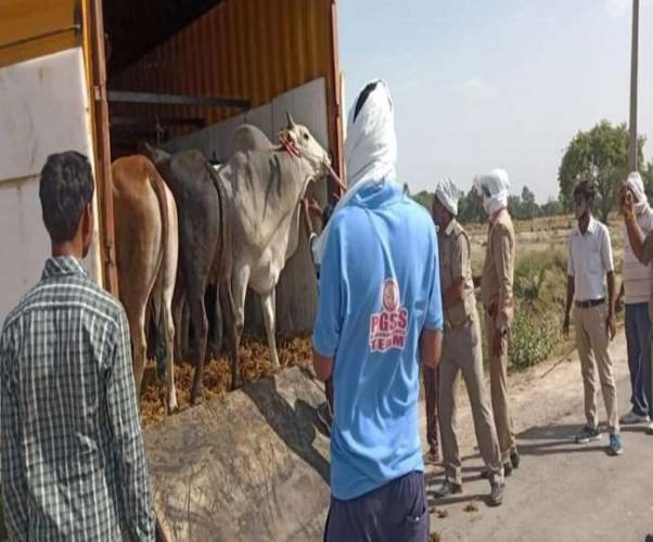फतेहपुर में मवेशियों से लदी कंटेनर छोड़कर तस्कर फरार