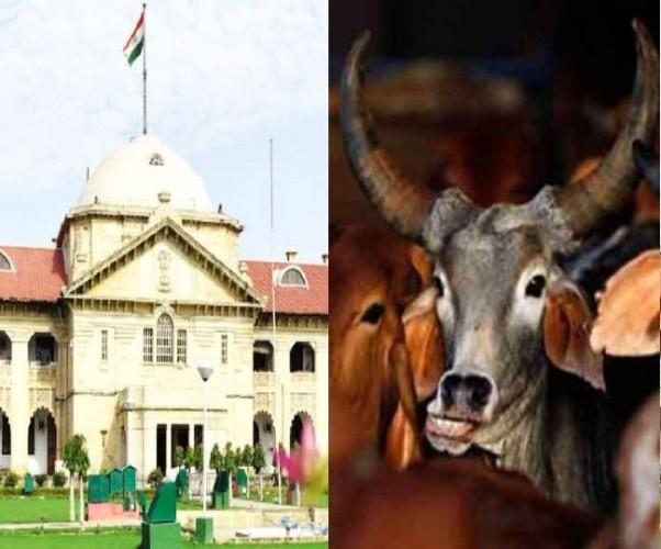 गाय भारत की संस्कृति; घोषित किया जाए राष्ट्रीय पशु